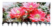 LED Screen for the Rental market - LSR-Mage